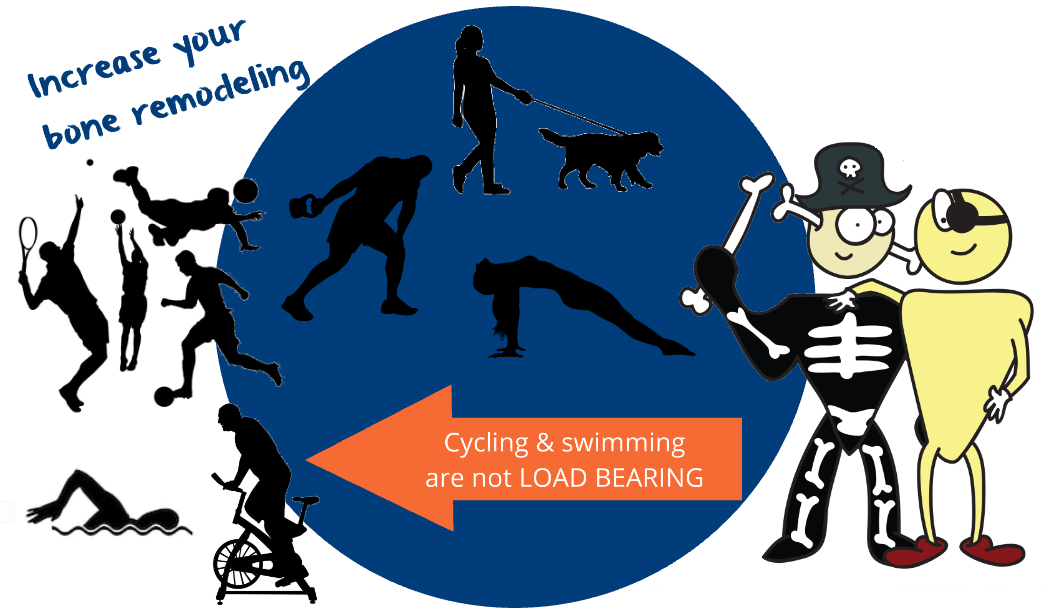 load bearing exercise increasing bone remodelling