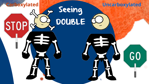 the osteocalcin twins