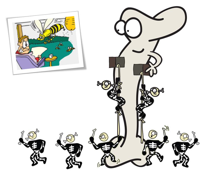 bone releasing osteocalcin