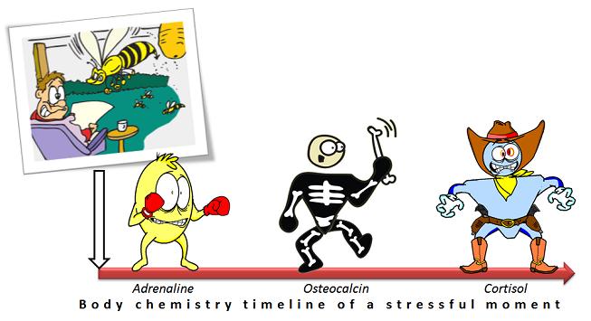 stress chemistry timeline