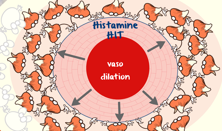 histamine induced vasodilation