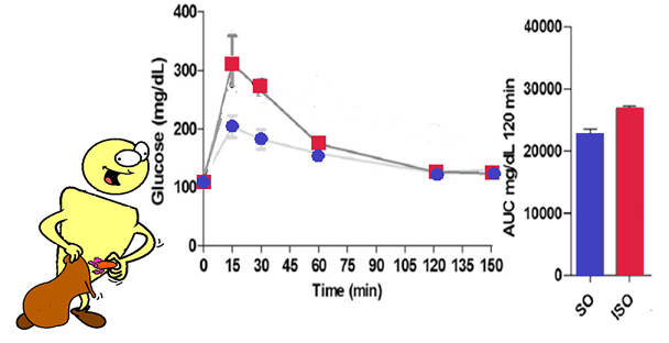 glucose tolerance in rats eating interesterified soyabean oil