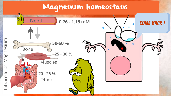 Mg homeostasis