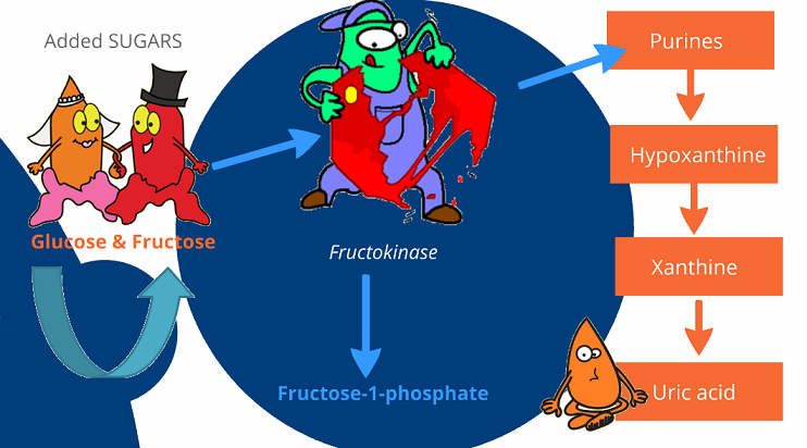 fructose to uric acid pathway