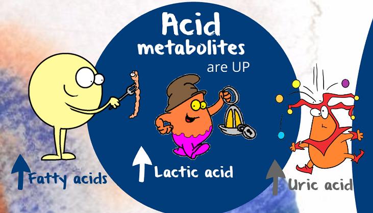 acid metabolites are up