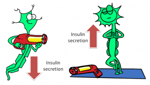 afferent hepatic nerve firing and insulin secretion (Is this the secret to fixing the hyperinsulinemia ?)
