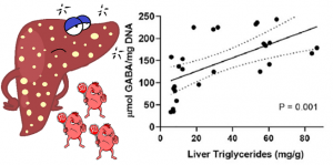fat accumulation in liver increases GABA release (Is this the secret to fixing the hyperinsulinemia ?)